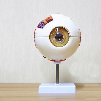 Human Eye Anatomy Model, Ent Ophthalmology, Eyeball Internal Structure, Cornea,