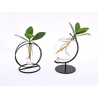 Indoor trees from Botanicly – 2 × Autograph tree Glas Mix Iron – Height: 8 cm – Clusia