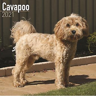 Cavapoo 2021 Wall Calendar by Created by Avonside Publishing Ltd