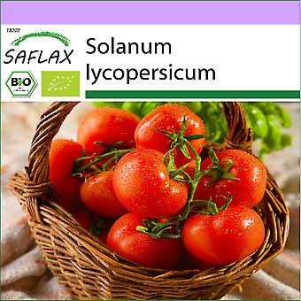 Saflax - 10 graines - Bio - Tomate - Berner Rose - BIO - Tomate - Rose de Berne - BIO - Pomodoro - Rosa di Berna - Ecol'oco - Tomate - Rosa de Berna - BIO - Tomate - Berner Rose