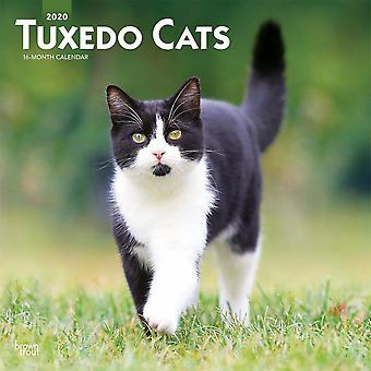 Tuxedo Katzen Kalender 2020