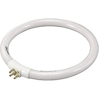 Świetlówka G10q 12 W Kształt pierścienia N/A (Ø x H) 138 mm x 13 mm EWG: A (A++ - E) 1 szt.)