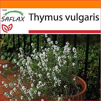 Saflax - tuin in de zak - 200 zaden - tijm - Thym commun - Timo comune - Tomillo - Echter Thymian