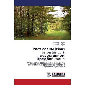 Rost Sosny Pinus Sylvestris L. V Lesostepnom Predbaykale by Zabuga Viktor