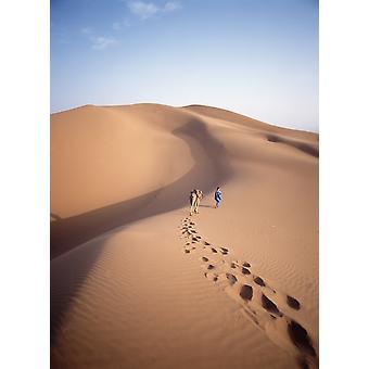 Blue Man Historically A Tribe Of Sahara Traders Leading Camel Through The Dunes At Dawn PosterPrint