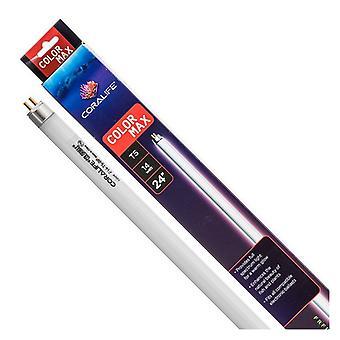 """מנורת פלורסנט קורליף ColorMax T5 - נורת """"24 - 14 וואט"""