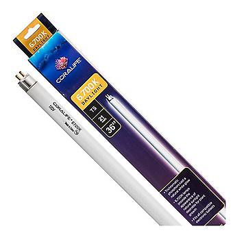 Coralife 6,700K Daylight T5 Lampe Fluorescente - Ampoule 36» - 21 Watt