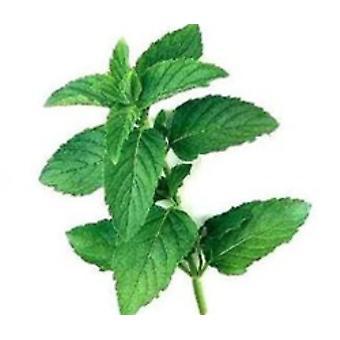 Peppermint Flavour Natural-( 8lb )