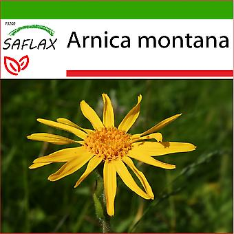 Saflax - 40 semillas - tierra - montaña Arnica - Arnica des montagnes - árnica - Árnica - /Echte árnica