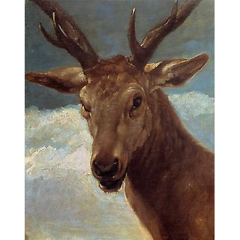The head of a Stag, Diego Velazquez, 50x40cm