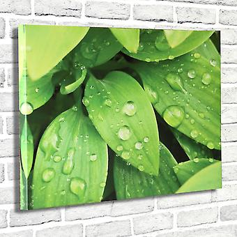 Photo Canvas Dew on Leaves, Wall Art 90 x 60 cm Attached to Real Wooden Framework