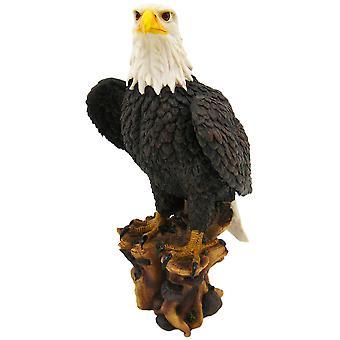 Amerikanischen stolz Weißkopfseeadler Statue Natur Abbildung