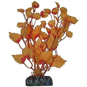צמחי מים הייגרוזיס (דג, קישוט, צמחים מארטיסיבים)