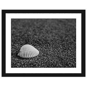 Picture In Black Frame, Seashell On Sand