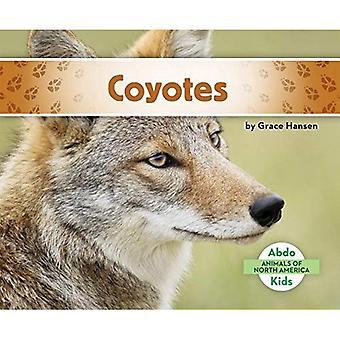 Coyotes (Animals of North America)