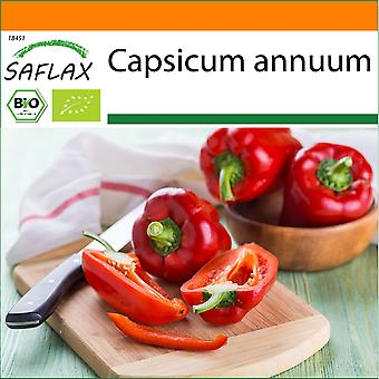 Saflax - Garten in der Tasche - 20 Samen - Bio - Sweet Pepper - California Wonder Red - BIO - Poivron - California wonder - Rouge - BIO - Peperone - California Wonder - Red - Ecol'gico - Pimiento - California Wonder - Rojo - BIO - Paprika - California Wonder - Rot