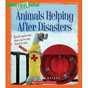 Animali aiutando dopo i disastri (veri libri)