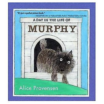 Dzień z życia Murphy