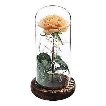 Eternity rose with light loop - Apricot