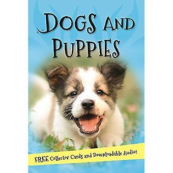 Det handlar om... Hundar och valpar (det handlar om...)
