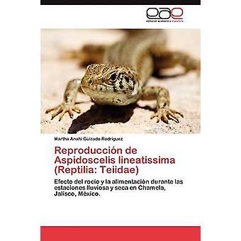 Reproduccin de Aspidoscelis Lineatissima Reptilia Teiidae durch Gizado Rodrguez Martha Anahi