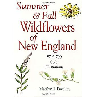 Summer & Fall Wildflowers of New England