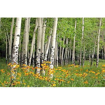 Fondo de pantalla Mural Aspen Wildflowers