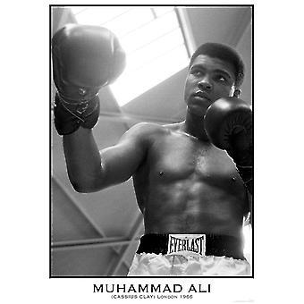 Muhammad Ali Poster Londen 1966 59,5 x 84 cm