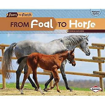 From Foal to Horse by Robin Nelson - 9780761386728 Book