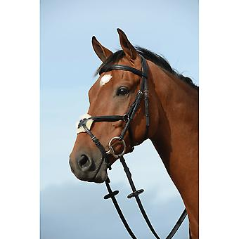 Collegiate Syntovia+ Padded Raised Figure 8 Bridle - Zwart