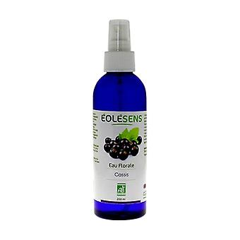 Organic Blackcurrant Floral Water 200 ml of floral water