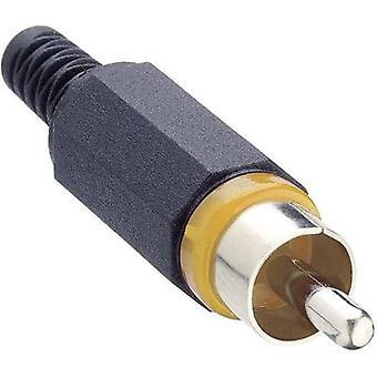 Lumberg XSTO 1-YE RCA connecteur Plug, nombre droit d'épingles: 2 Jaune 1 pc(s)