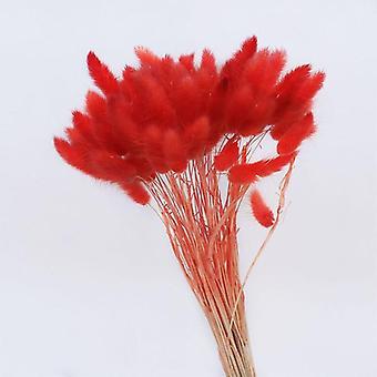 Gradient Lagurus, Ovatus Rabbit Tail Grass Natural Dried Flowers For Wedding,