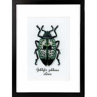 Vervaco Contato Cross Stitch Kit: Blue Beetle