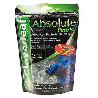 Cloverleaf Absolute Pearls - Aquarium