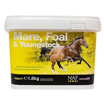 NAF Naf Stute Fohlen & Youngstock