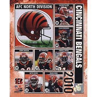 2010 Cincinnati Bengals Team Composite Sports Photo