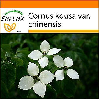 Saflax - Garden in the Bag - 30 seeds - Chinese Dogwood - Cornouiller du Japon - Corniolo giapponese - Cornejo chino - Asiatischer Blüten - Hartriegel