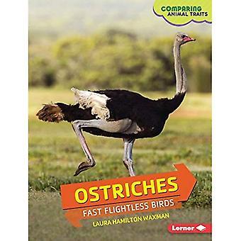 Ostriches: Fast Flightless Birds (Comparing Animal Traits)