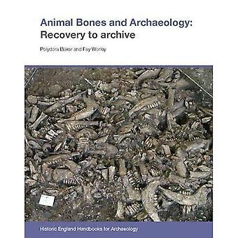 Animal Bones en Archeologie: Herstel naar archief