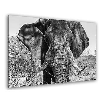 Het Afrikaanse olifant schilderen
