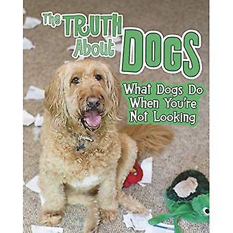 Die Wahrheit über Hunde: was Hunde tun, wenn Sie nicht suchen (Bitte lesen!: Haustiere Undercover!)