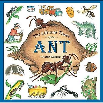 La vita ei tempi della formica