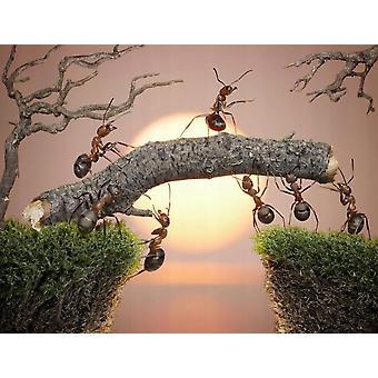 Tapetti Mural muurahaisia tiimi työtä