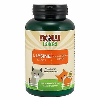 Agora Foods L-Lysine para Gatos, 8 oz