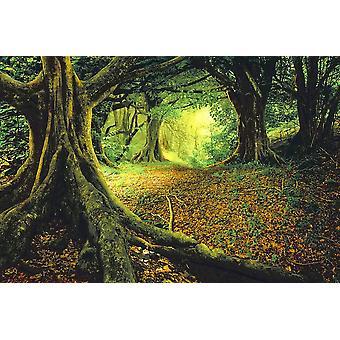 Taustakuva seinämaalaus Aasian trooppinen sademetsä (400x260 cm)
