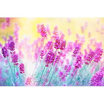 Fleur de lavande murale de fond d'écran