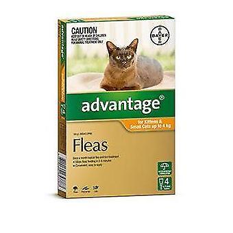 Vorteil Orange 4 Pack kleine Katze 0-4 kg