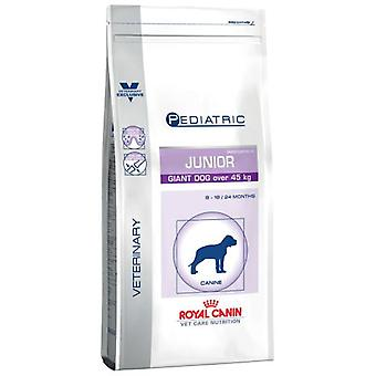 Royal Canin Pediatric Junior Giant Dog (Dogs , Dog Food , Dry Food , Veterinary diet)