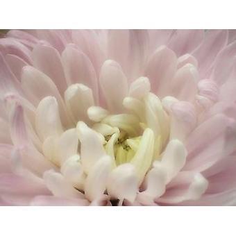 Печать плаката Blume Chrysantheme 2 мая